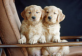 PUP 08 GR0096 01