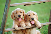 PUP 08 GR0098 01