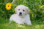 PUP 08 JE0003 01