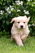 PUP 08 JE0005 01