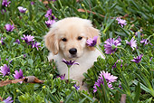 PUP 08 LS0016 01