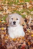 PUP 08 LS0018 01