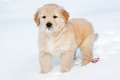 PUP 08 LS0022 01
