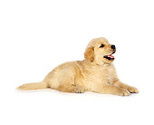 PUP 08 RK0155 01