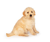 PUP 08 RK0155 13