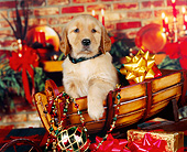 PUP 08 RK0222 08