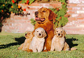 PUP 08 RK0291 01