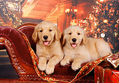 PUP 08 RK0296 03