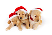 PUP 08 RK0337 01