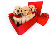 PUP 08 RK0339 01