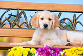 PUP 08 RK0368 01