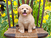 PUP 08 RK0373 01