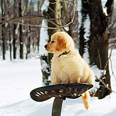 PUP 08 RS0008 01