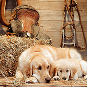 PUP 08 RS0025 04