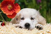 PUP 08 SJ0001 01