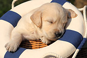 PUP 08 SJ0002 01