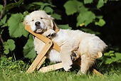 PUP 08 SS0014 01