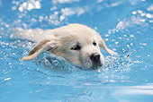 PUP 08 SS0017 01
