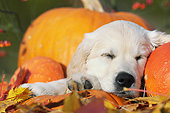 PUP 08 SS0023 01