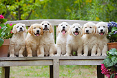 PUP 08 SS0029 01
