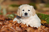 PUP 08 SS0034 01