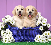 PUP 08 XA0003 01
