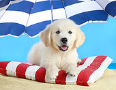 PUP 08 XA0005 01