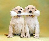 PUP 08 XA0008 01