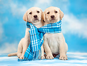 PUP 08 XA0009 01