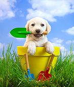 PUP 08 XA0010 01