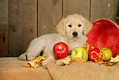 PUP 08 CE0004 01