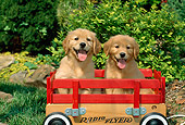 PUP 08 CE0005 01