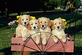 PUP 08 CE0007 01