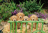 PUP 08 CE0008 01