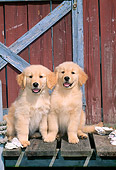 PUP 08 CE0013 01