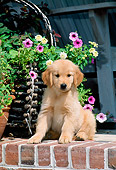 PUP 08 CE0015 01