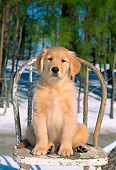 PUP 08 CE0018 01