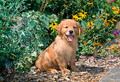 PUP 08 CE0024 01