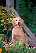PUP 08 CE0026 01
