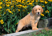 PUP 08 CE0027 01