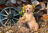 PUP 08 CE0028 01