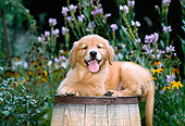 PUP 08 CE0032 01