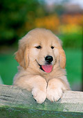 PUP 08 CE0039 01