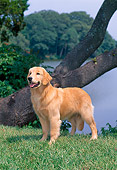 PUP 08 CE0041 01