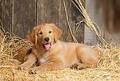 PUP 08 DC0002 01