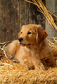 PUP 08 DC0004 01