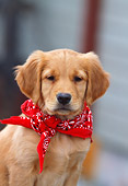 PUP 08 DS0002 01