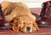 PUP 08 DS0004 01