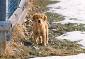 PUP 08 DS0006 01
