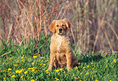 PUP 08 DS0009 01